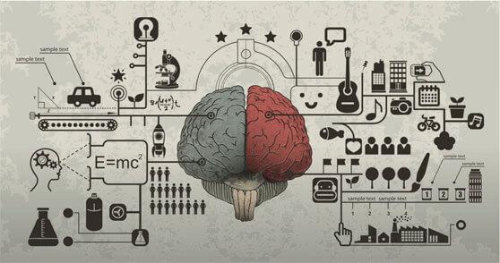 cerebro emisferios izquierdo razón y derecho emoción
